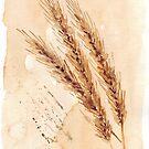 Goldener Weizen - botanische Illustration von Maree Clarkson