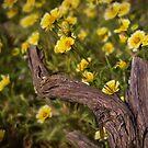 Goldene Wildblumen von Celeste Mookherjee