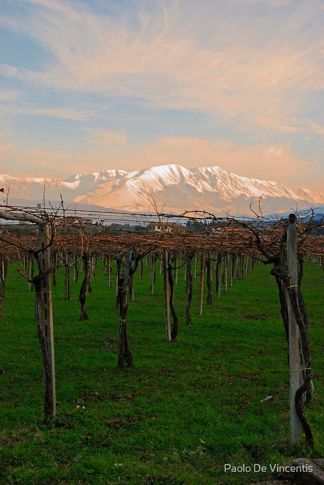 Fresh Vines by Paolo De Vincentis