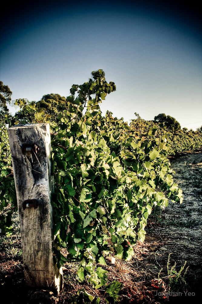 Vines by Jonathan Yeo