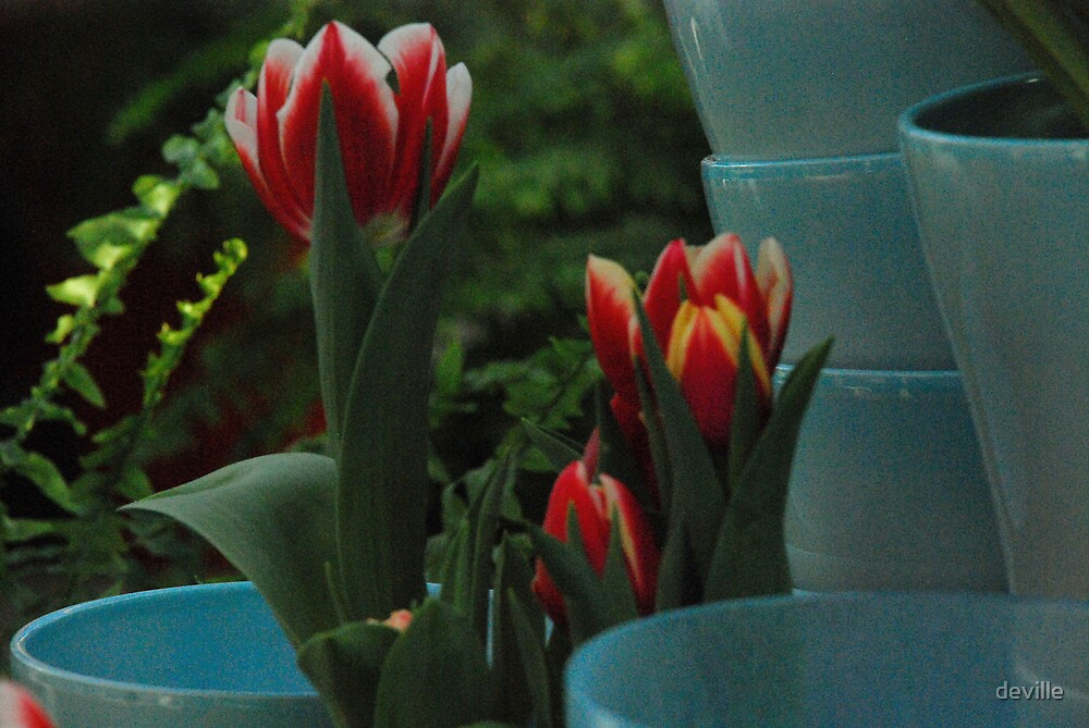 tulips go with pots by deville