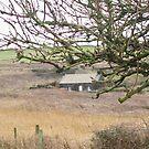West Wales  by Emma Fitzgerald