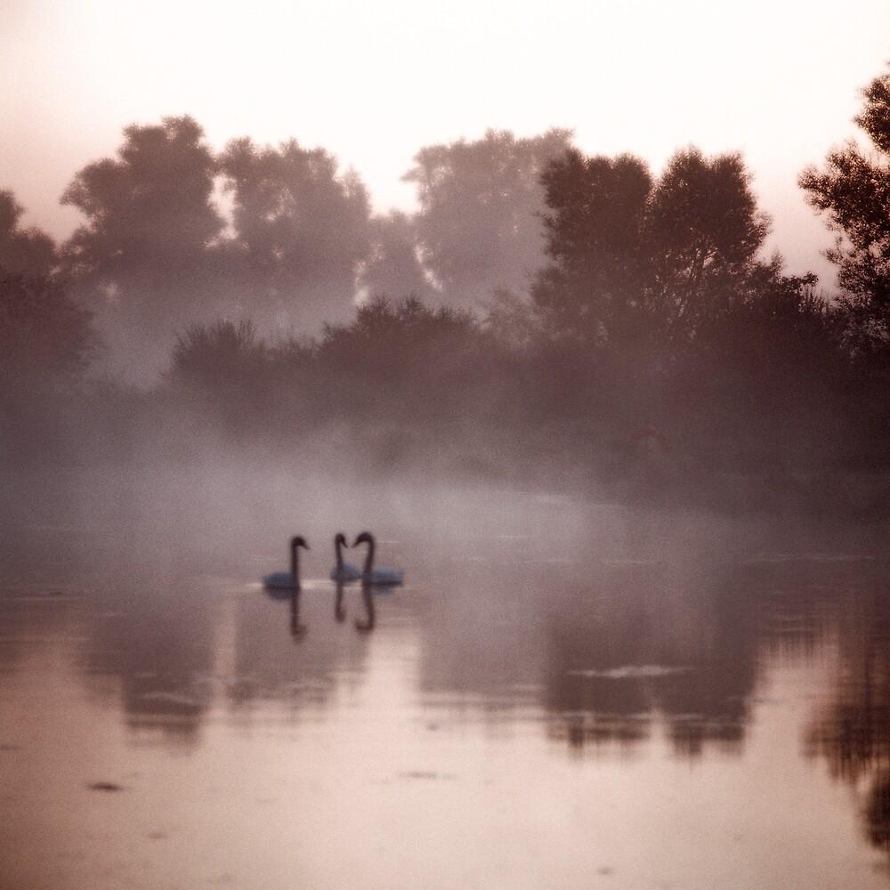 Three swans by jephoto