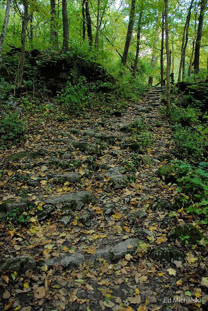 A worn stoney path through forest by Ed Michalski