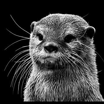 Otter by pinestopalms