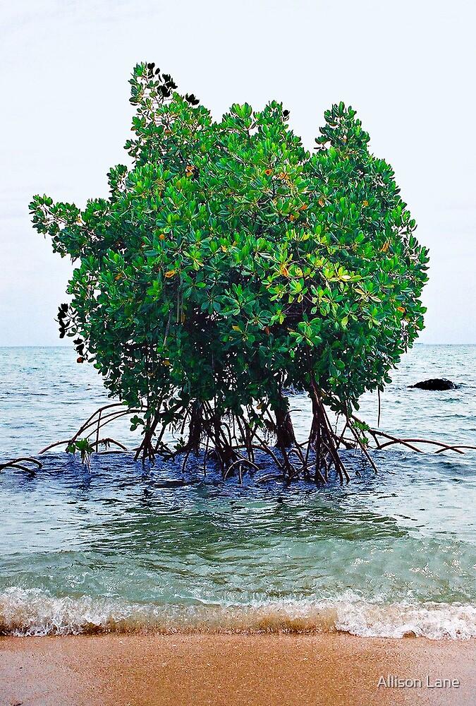 Sea Trees by Allison Lane
