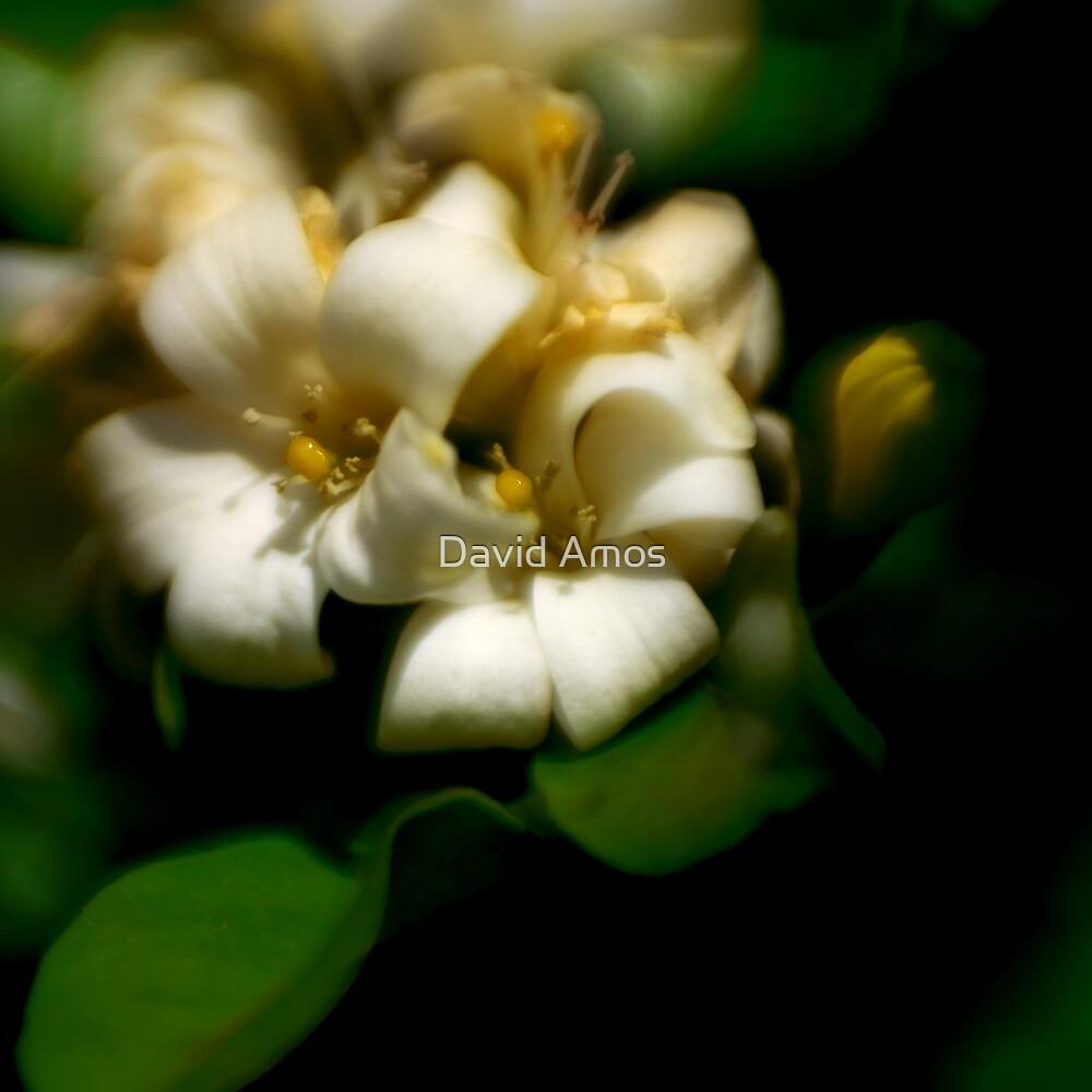 White Flower by David Amos
