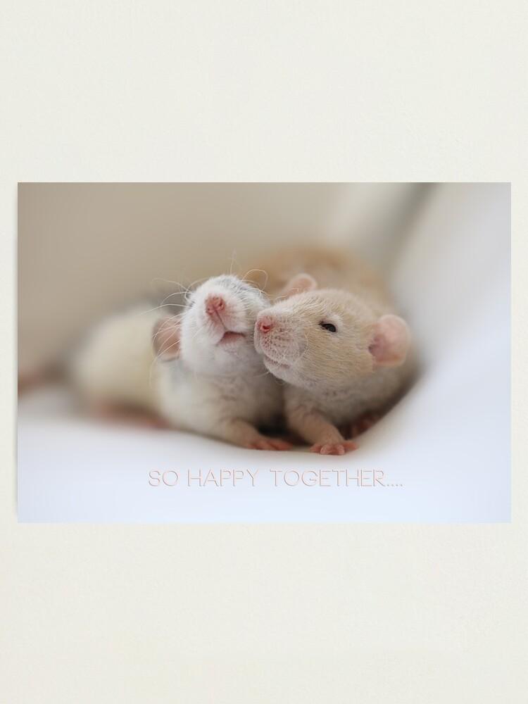Alternate view of Friendship Photographic Print