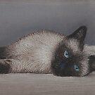 Siamese Cat by Kate Wilkey
