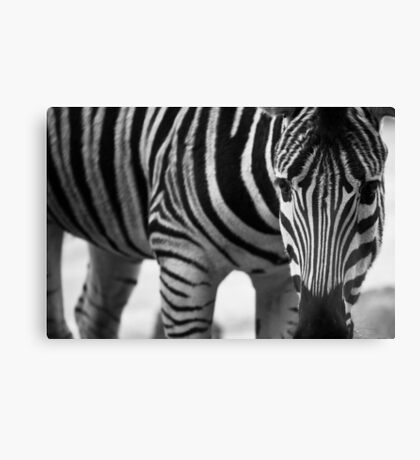 Stripes and more stripes Canvas Print