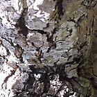 Old Tree Bark by DAdeSimone