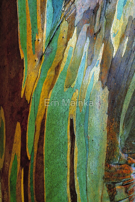 Quot Snow Gum Bark Quot By Ern Mainka Redbubble