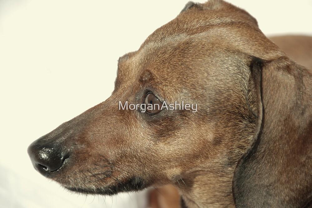 The Dog by MorganAshley