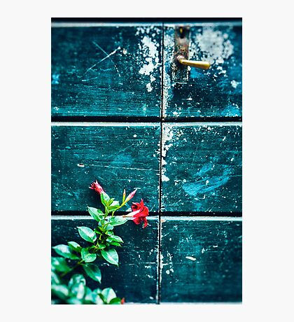 Red flower against old door Photographic Print
