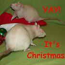 Christmas rats by mindgoop