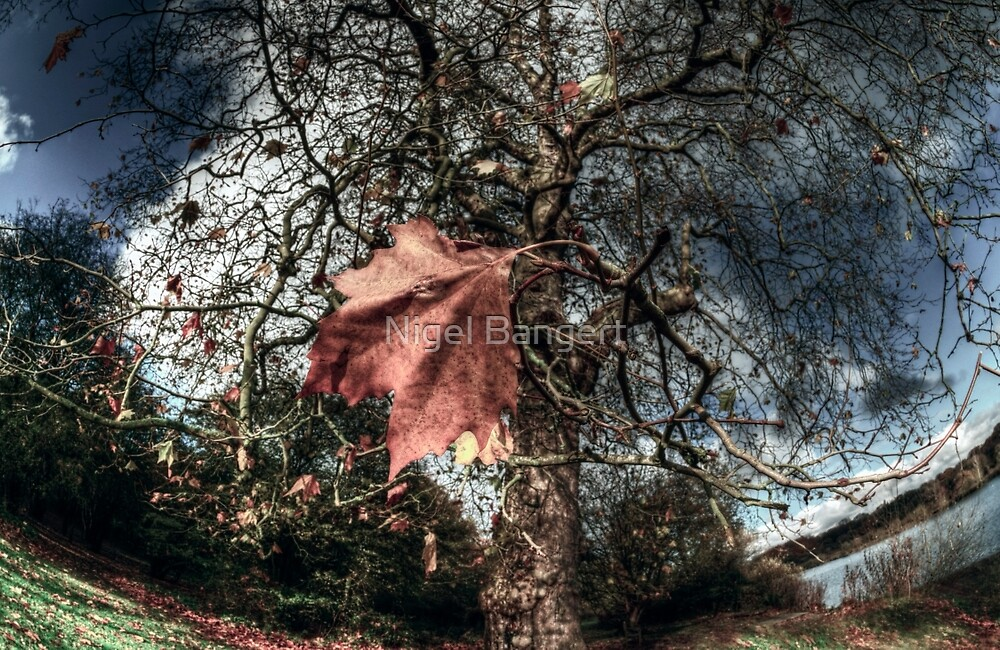 One of the Last to Fall by Nigel Bangert
