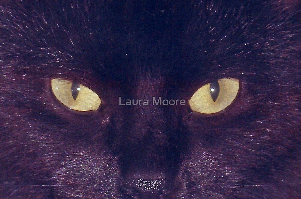 Cats Eyes by Laura Moore