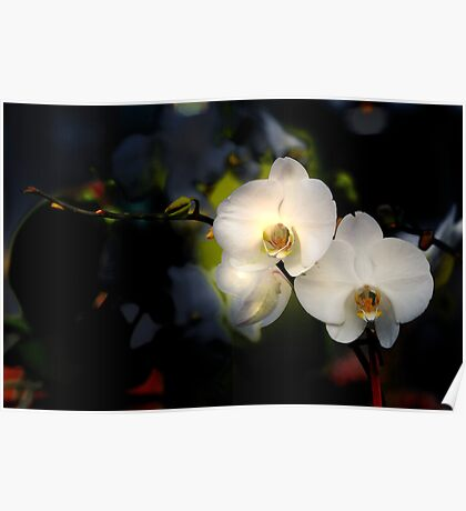 Double Orchids Poster