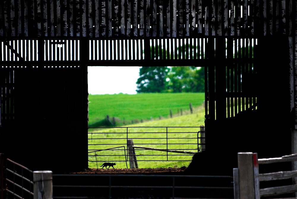 barn cat prowling by Lorne Chesal