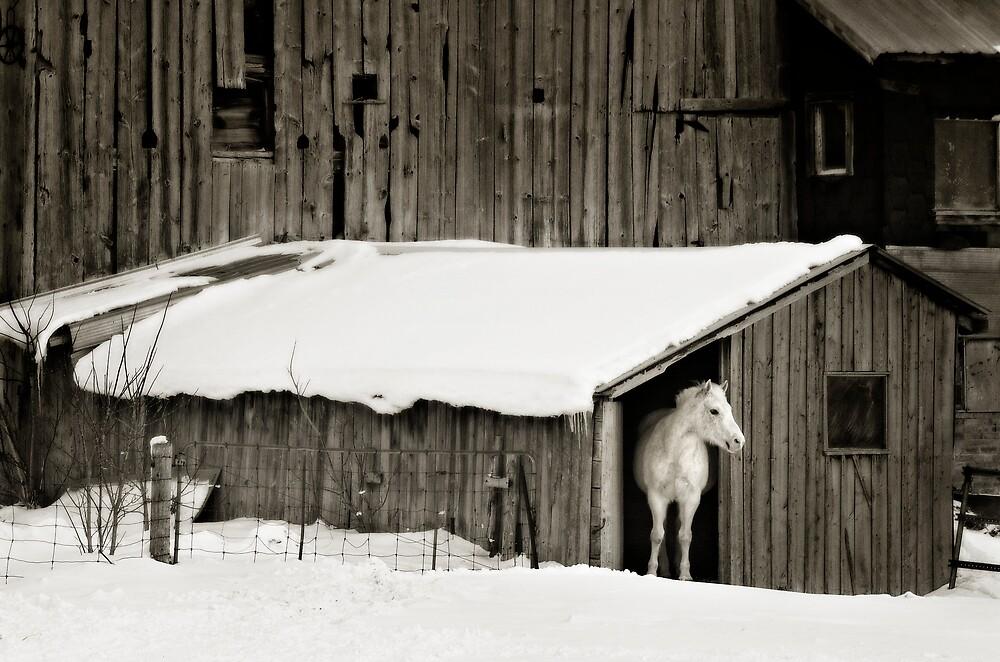 KD in winter by Lorne Chesal