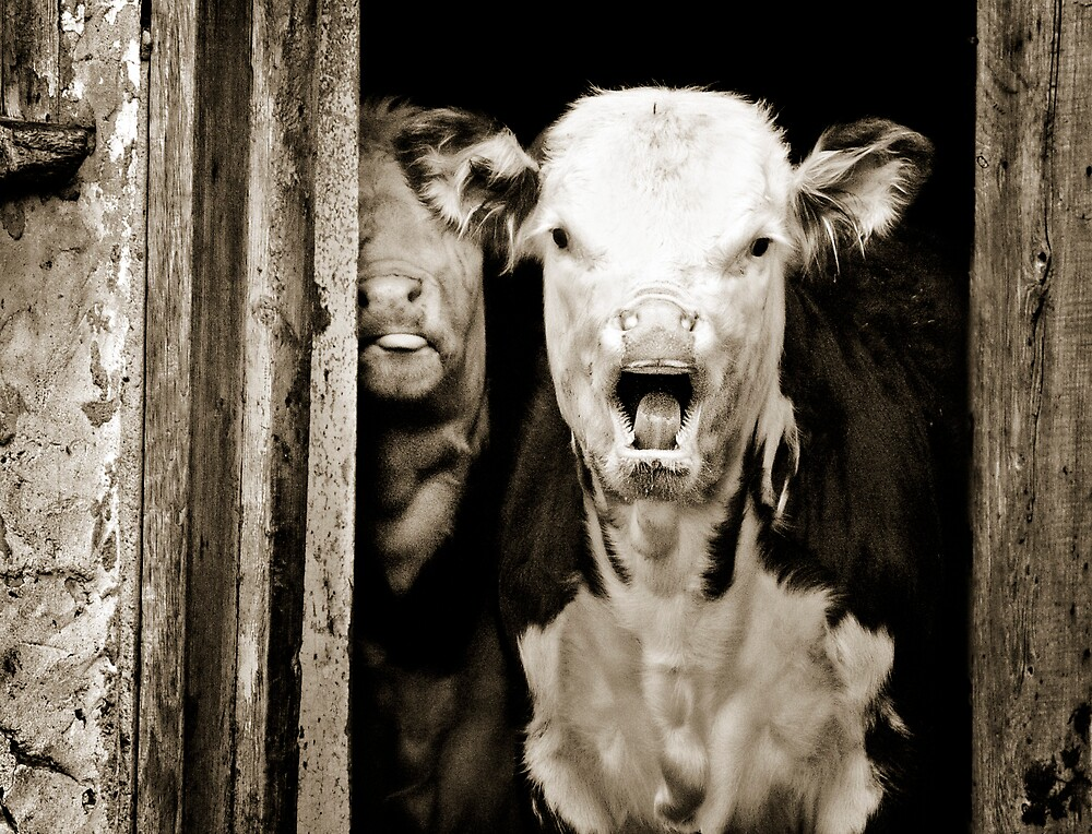 mad cow? by Lorne Chesal