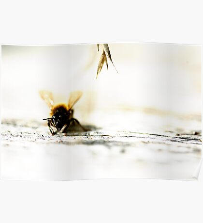 lone bee Poster