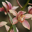 Lovely Orchid by Jacqueline Barreto