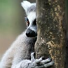 The Tree Hugger by Ladymoose