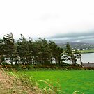 Windblown Trees, Donegal, Ireland by Shulie1