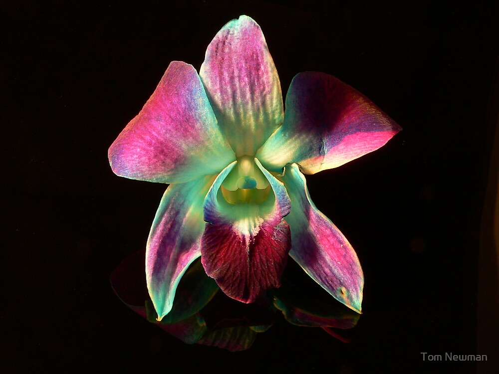 Orchid by Tom Newman