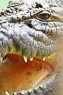 Ein Croc namens Luca # 1 von Evita