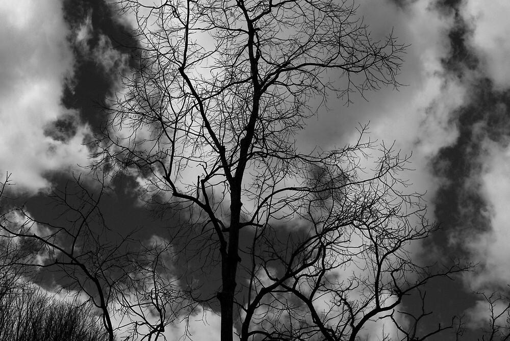 Black & White Tree by Rod  Adams