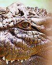 Ein Croc namens Luca von Evita