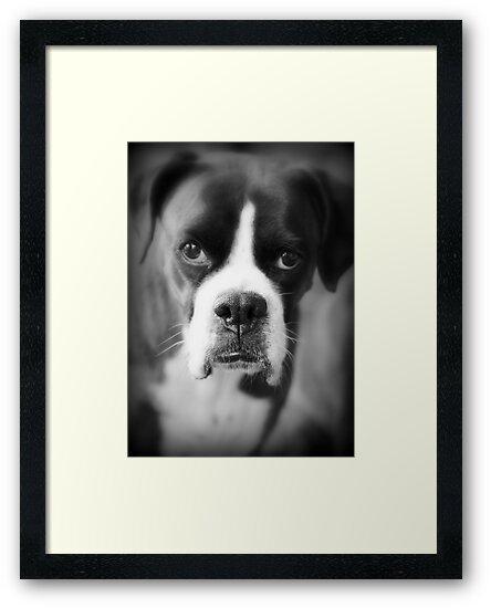 Arwen's Portrait - Female Boxer - Boxer Dogs Series by Evita