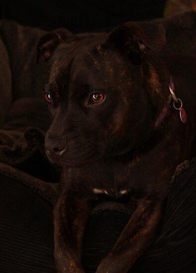 Milly's Portrait by Evita