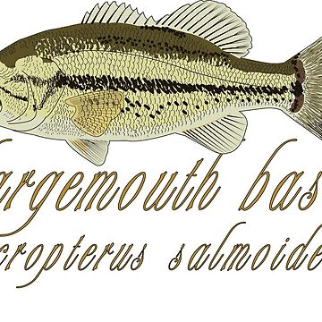 Largemouth Bass - micropterus salmoides by KZiegman