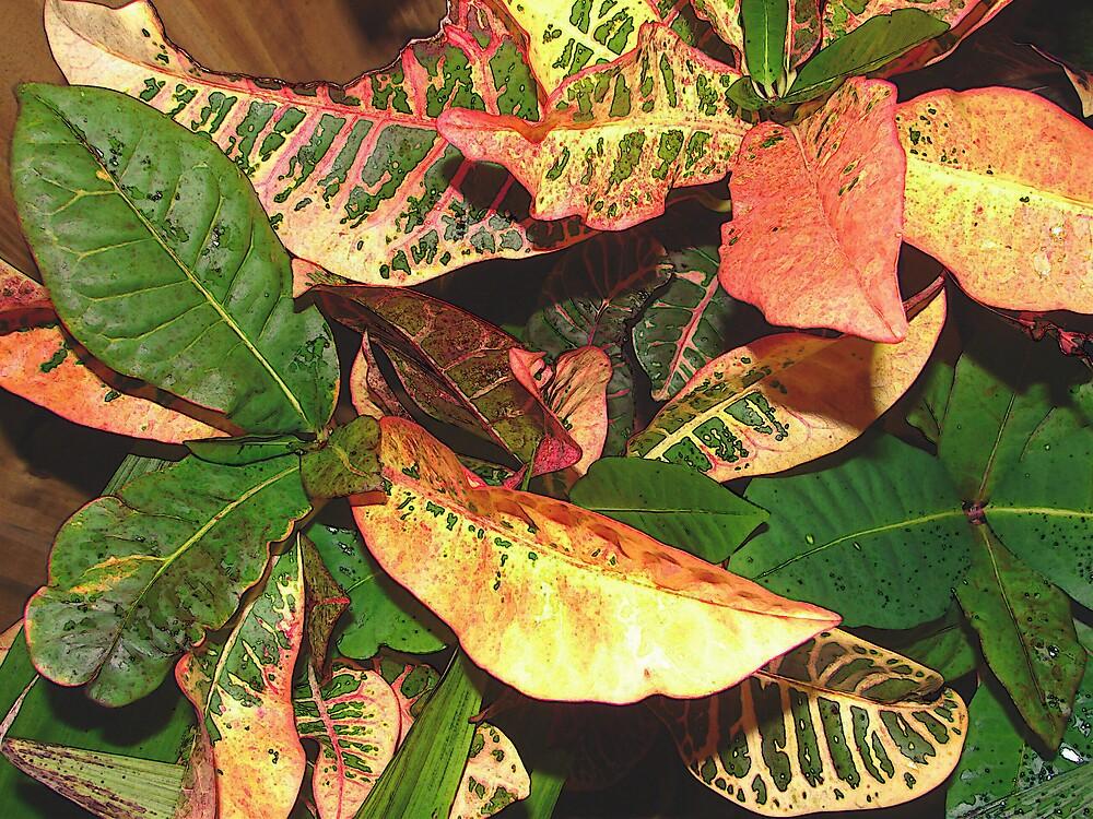 Botanical Leaves by shadyuk