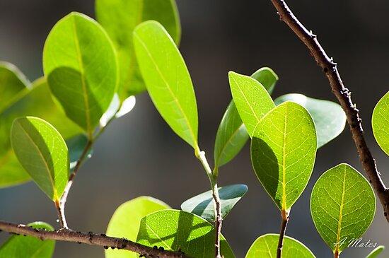 Green Leaves by Cropfactorgroup