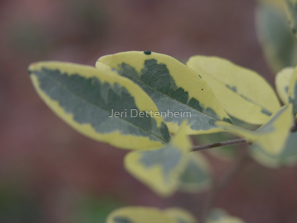 Painted Leaves by Jeri Dettenheim