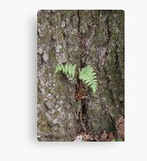 Protected Canvas Print