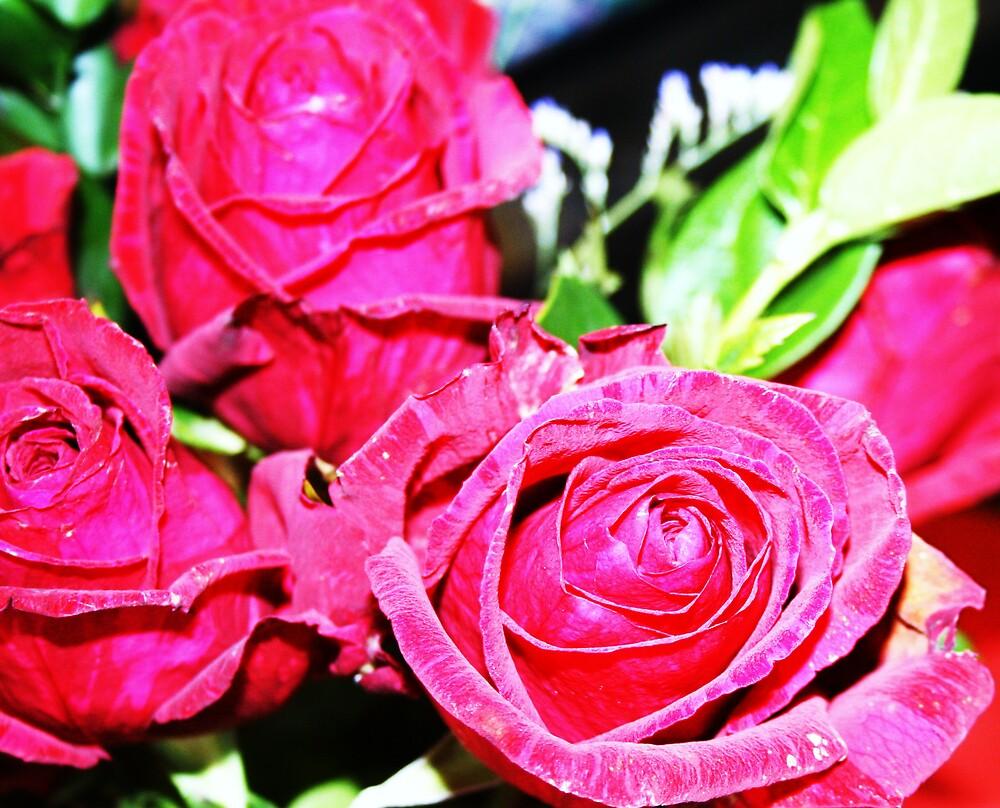 Valentine roses by mel1forjon