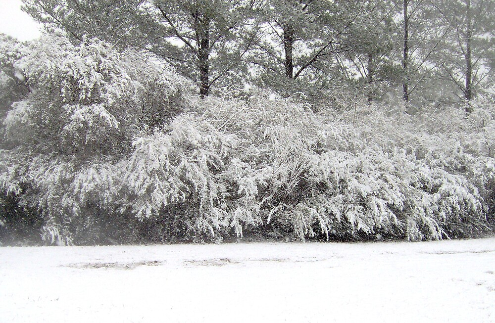 Alabamas first snow in 10 years by mel1forjon