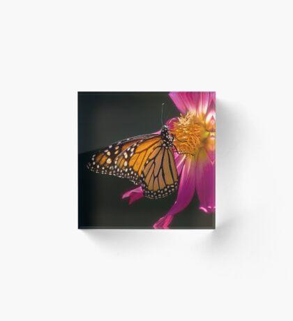 Monarch nippt an Dahliennektar Acrylblock