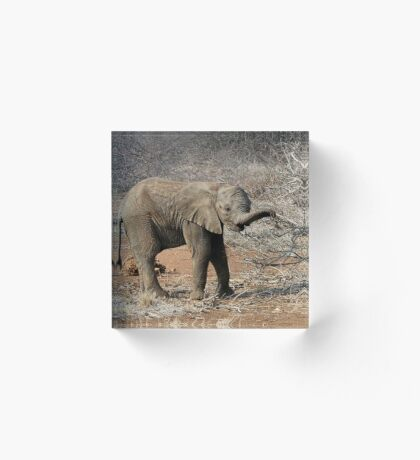 HUNGRY BABY - THE ELEPHANT - Loxodonta Africana Acrylic Block