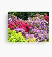 Reds and Pinks Canvas Print