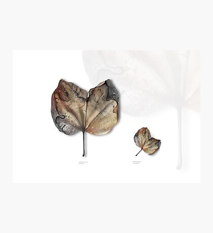 Leaf Exhibit I Photographic Print