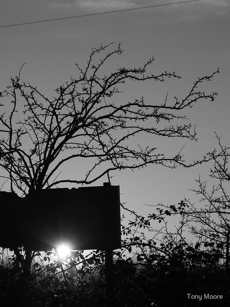 Thorny Sunset by Tony Moore