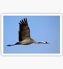 Common crane (Grus grus) also known as the Eurasian Crane Sticker