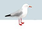 Seagull by © Karin Taylor