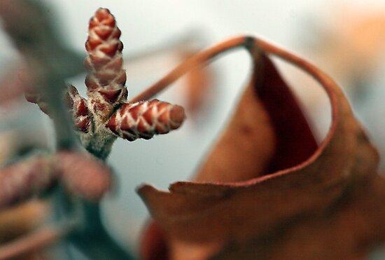 Seedling by Judson Joyce